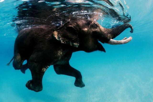 Happy Smily Elephante series :))
