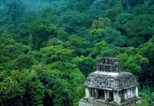 Mexico_Palenque_ruins_and_Jungle
