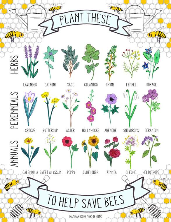 love bees then plant these