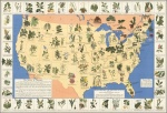 Medicinal Plants of America – graphic