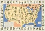 Medicinal Plants of America –graphic