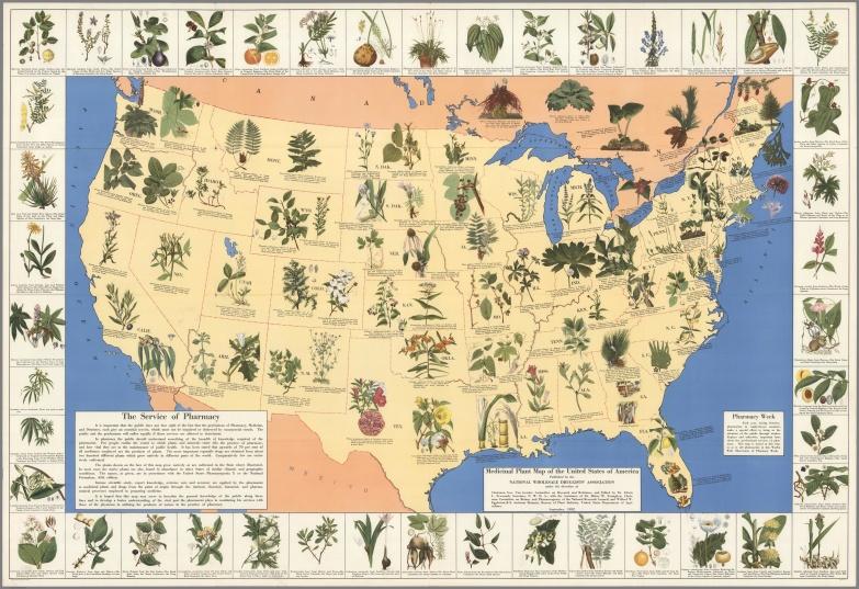 Medicinal Plants of America